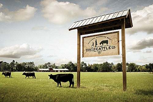 Cattle_COURTESY-OF