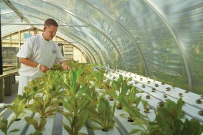 Executive Chef Daven Wardynski Harvesting from The Sprouting Project_Omni Amelia Island Plantation Resort High Res